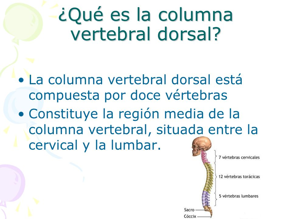 ¿Qué es la columna vertebral dorsal