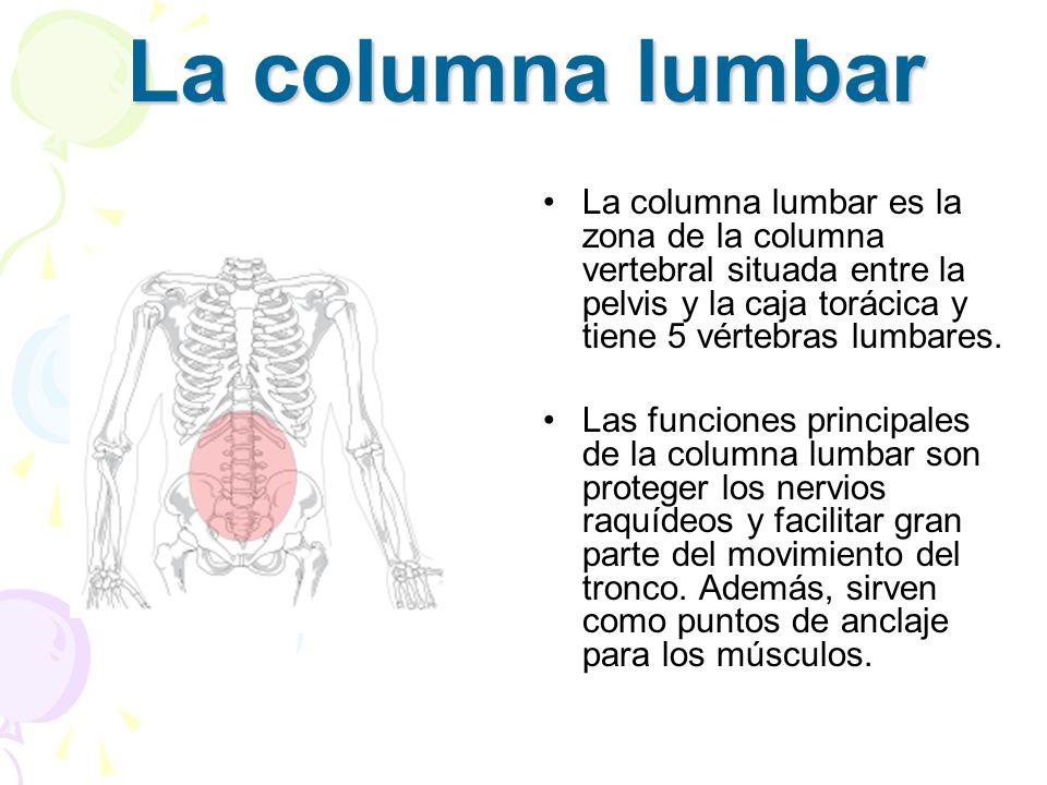 La columna lumbarLa columna lumbar es la zona de la columna vertebral situada entre la pelvis y la caja torácica y tiene 5 vértebras lumbares.
