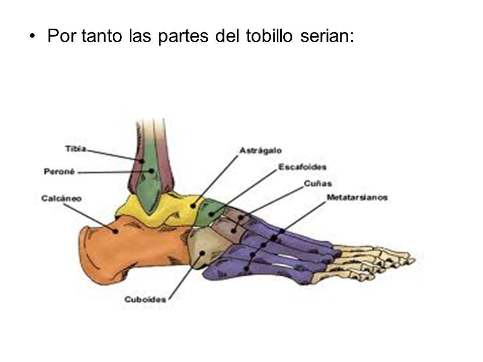Por tanto las partes del tobillo serian:
