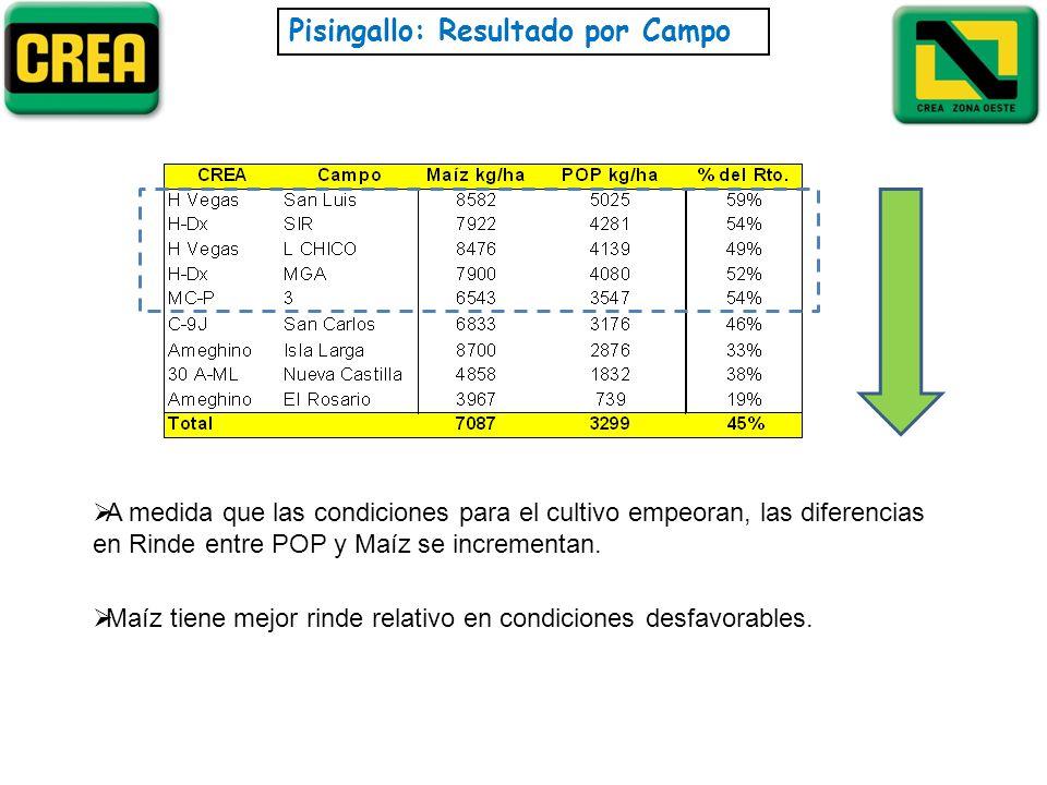 Pisingallo: Resultado por Campo