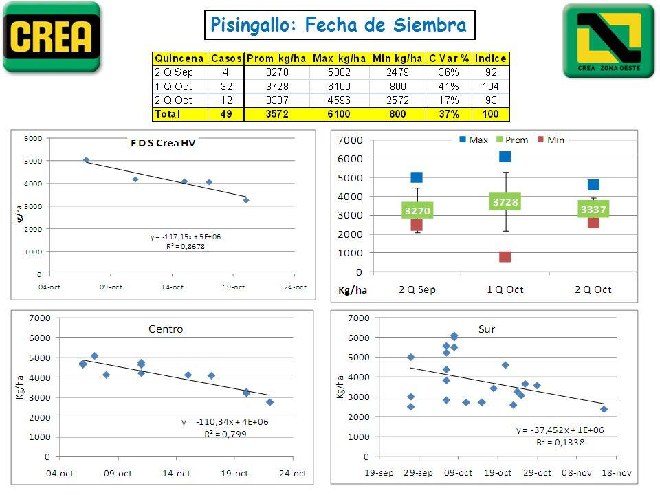 Pisingallo: Fecha de Siembra