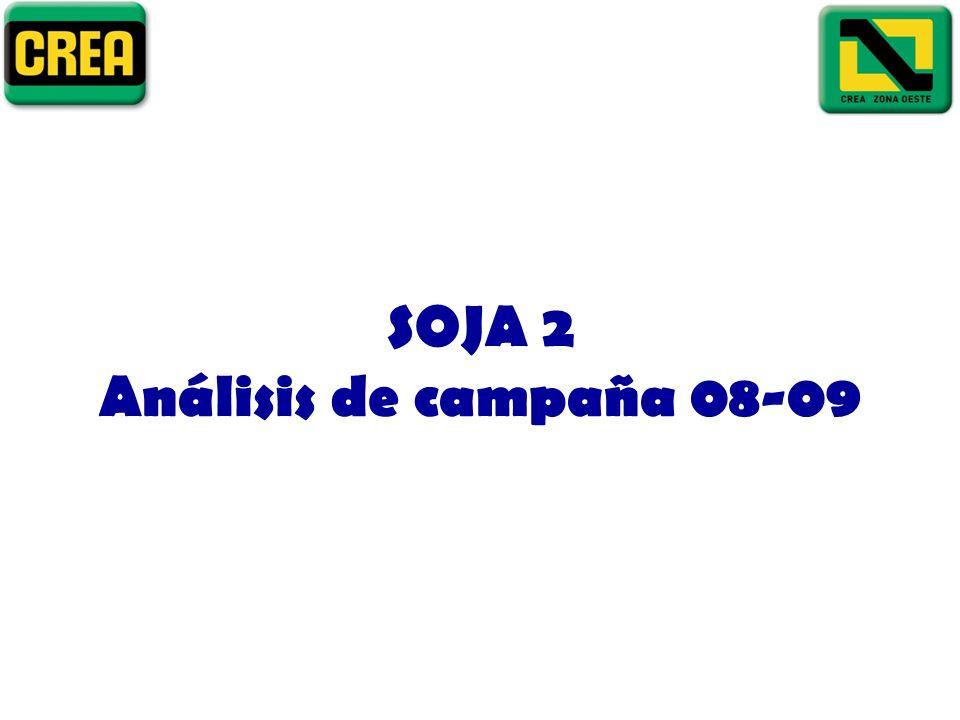 SOJA 2 Análisis de campaña 08-09
