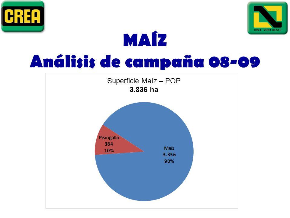 MAÍZ Análisis de campaña 08-09