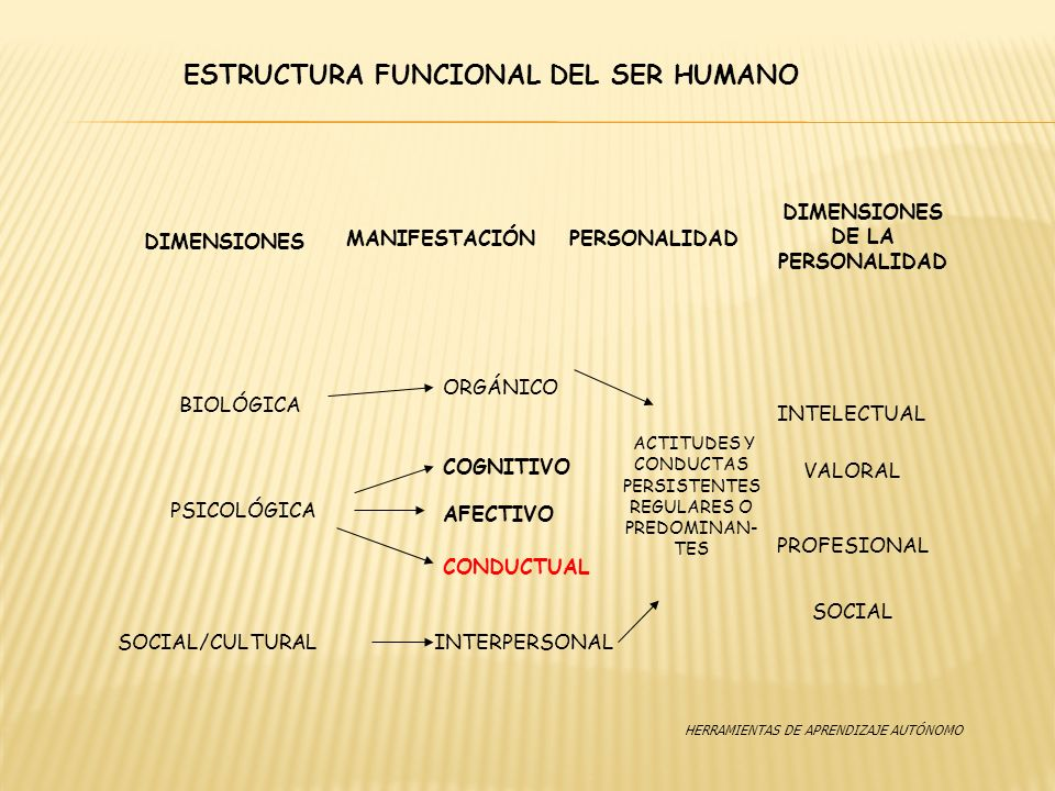 ESTRUCTURA FUNCIONAL DEL SER HUMANO