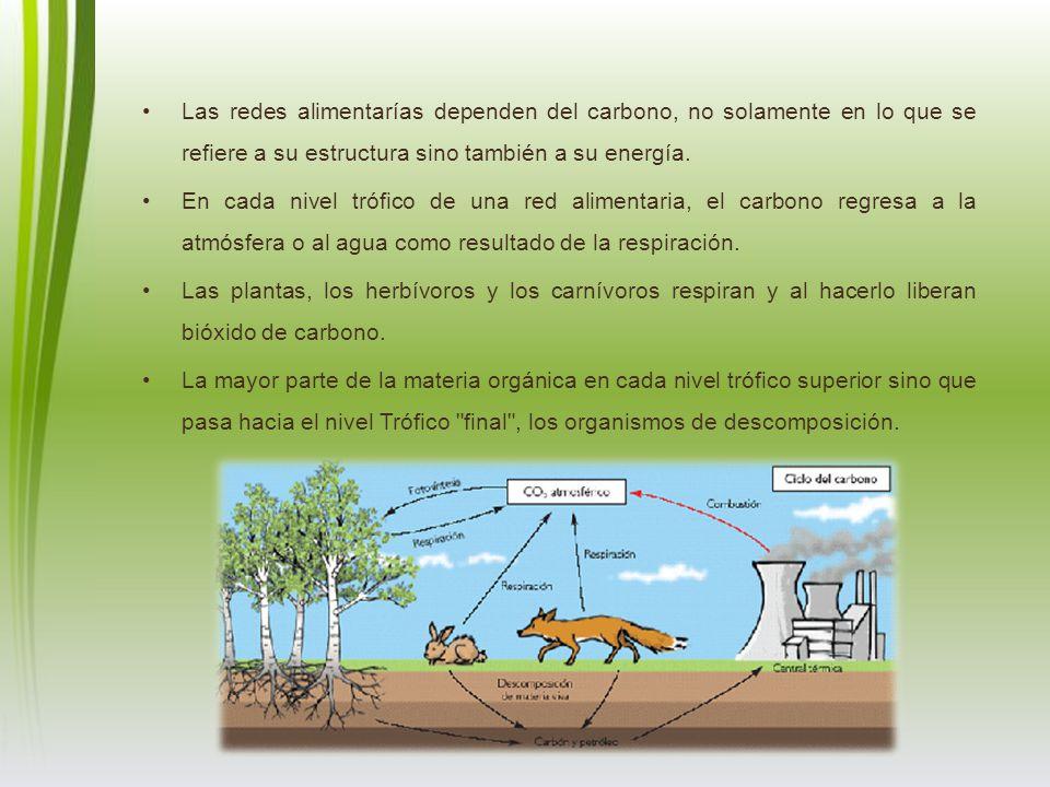 Las redes alimentarías dependen del carbono, no solamente en lo que se refiere a su estructura sino también a su energía.