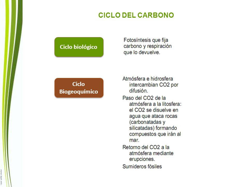 CICLO DEL CARBONO Ciclo biológico Ciclo Biogeoquímico