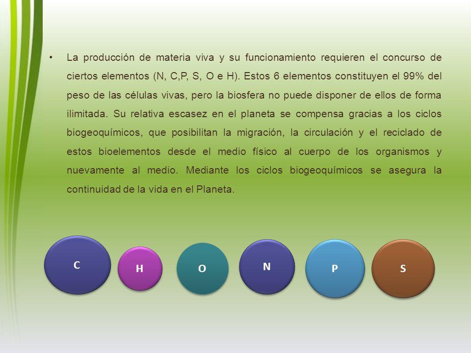 La producción de materia viva y su funcionamiento requieren el concurso de ciertos elementos (N, C,P, S, O e H). Estos 6 elementos constituyen el 99% del peso de las células vivas, pero la biosfera no puede disponer de ellos de forma ilimitada. Su relativa escasez en el planeta se compensa gracias a los ciclos biogeoquímicos, que posibilitan la migración, la circulación y el reciclado de estos bioelementos desde el medio físico al cuerpo de los organismos y nuevamente al medio. Mediante los ciclos biogeoquímicos se asegura la continuidad de la vida en el Planeta.