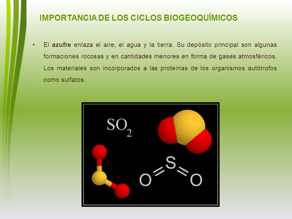 IMPORTANCIA DE LOS CICLOS BIOGEOQUÍMICOS