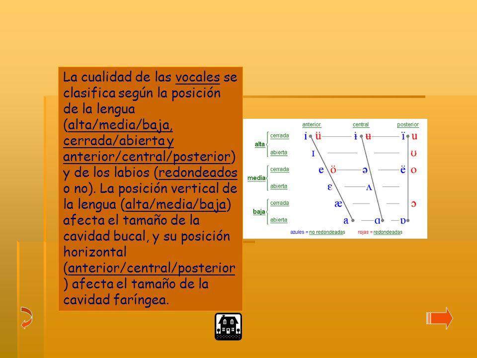 La cualidad de las vocales se clasifica según la posición de la lengua (alta/media/baja, cerrada/abierta y anterior/central/posterior) y de los labios (redondeados o no).