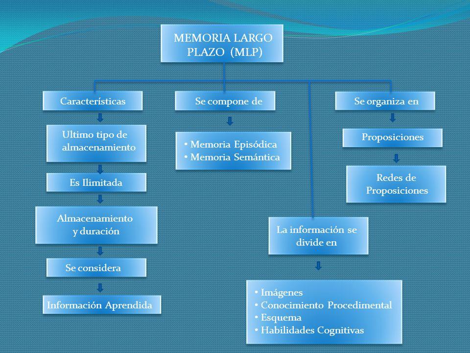 MEMORIA LARGO PLAZO (MLP) Características Se compone de Se organiza en