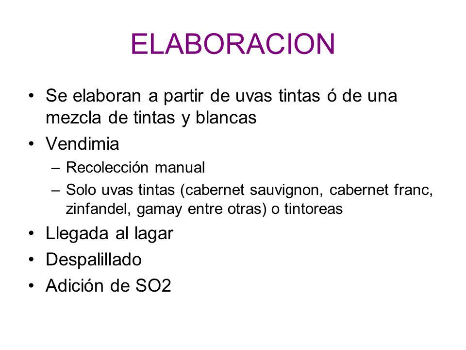 ELABORACION Se elaboran a partir de uvas tintas ó de una mezcla de tintas y blancas. Vendimia. Recolección manual.