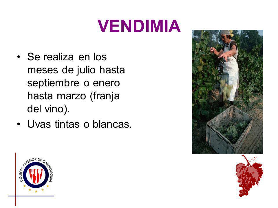 VENDIMIA Se realiza en los meses de julio hasta septiembre o enero hasta marzo (franja del vino).