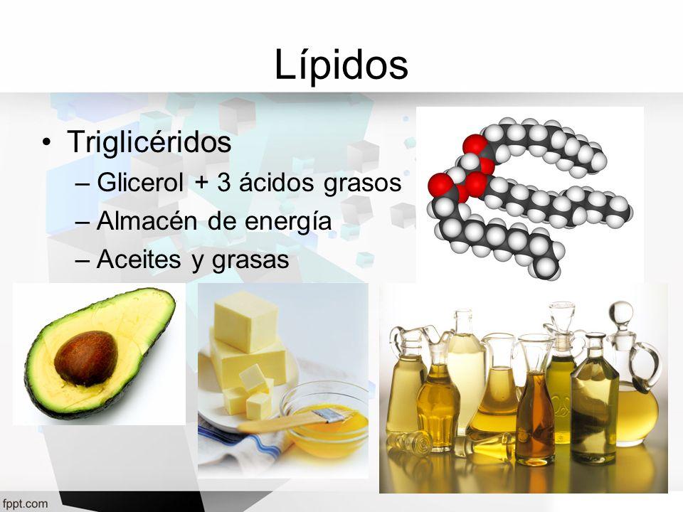 Lípidos Triglicéridos Glicerol + 3 ácidos grasos Almacén de energía