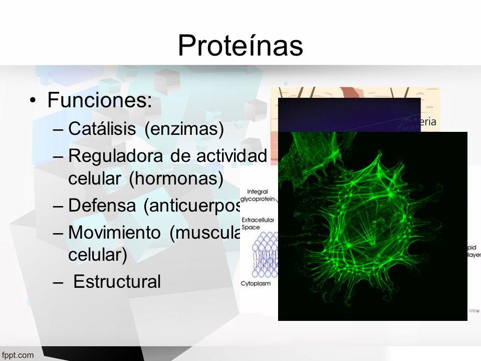 Proteínas Funciones: Catálisis (enzimas)