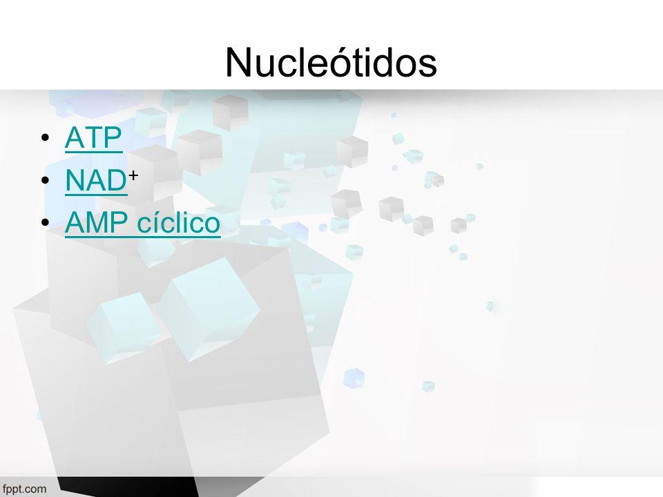 Nucleótidos ATP NAD+ AMP cíclico
