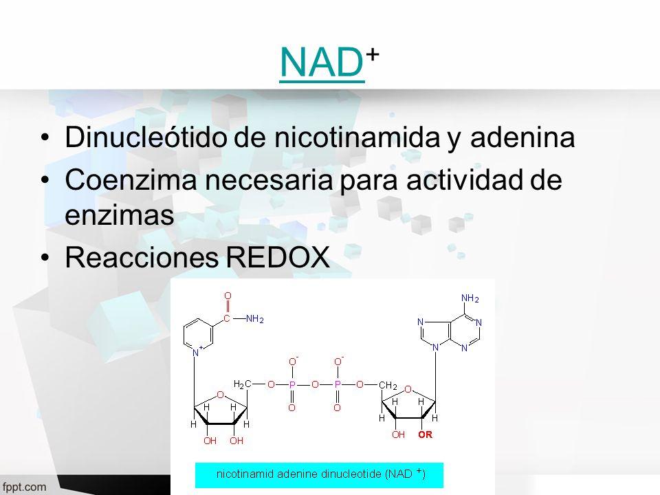 NAD+ Dinucleótido de nicotinamida y adenina