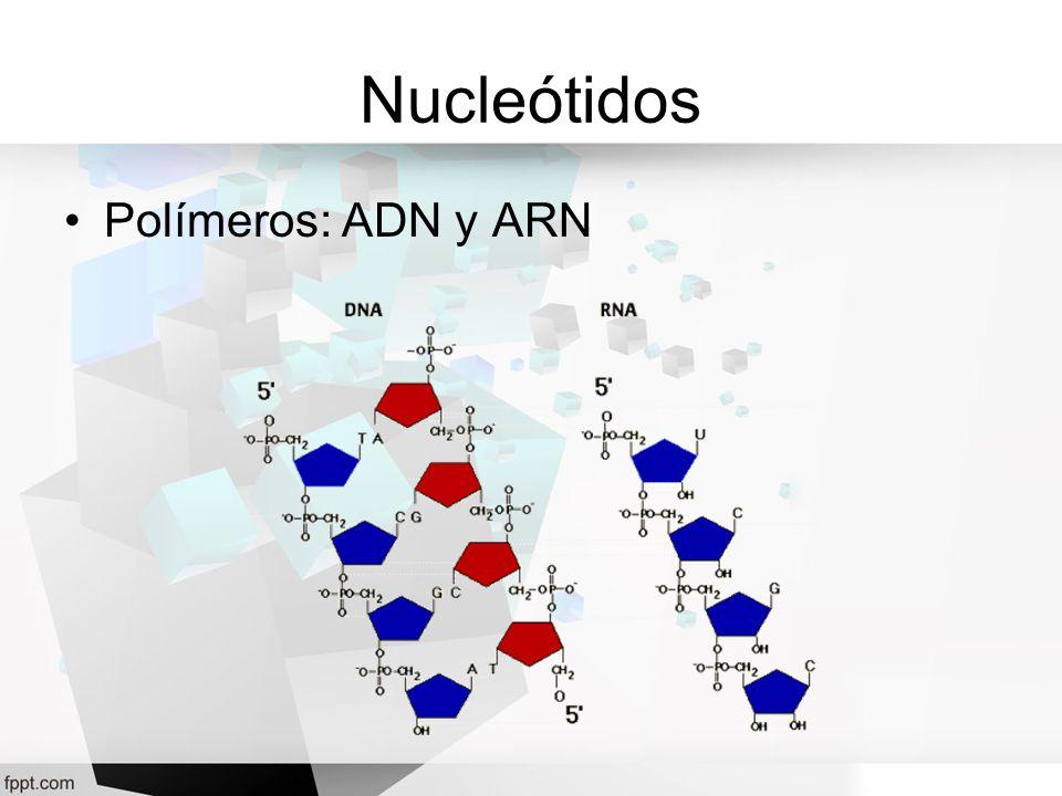 Nucleótidos Polímeros: ADN y ARN