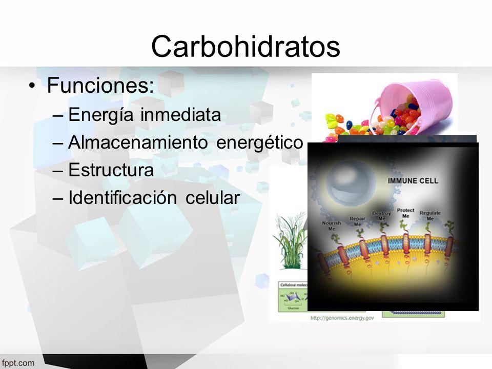 Carbohidratos Funciones: Energía inmediata Almacenamiento energético