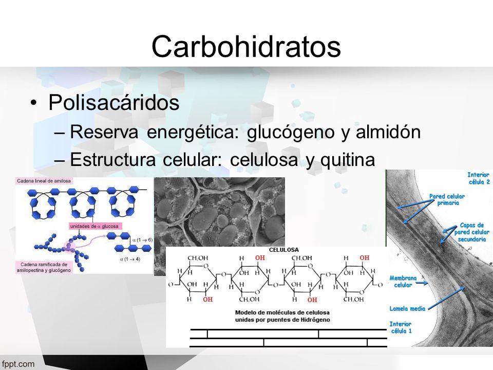 Carbohidratos Polisacáridos Reserva energética: glucógeno y almidón