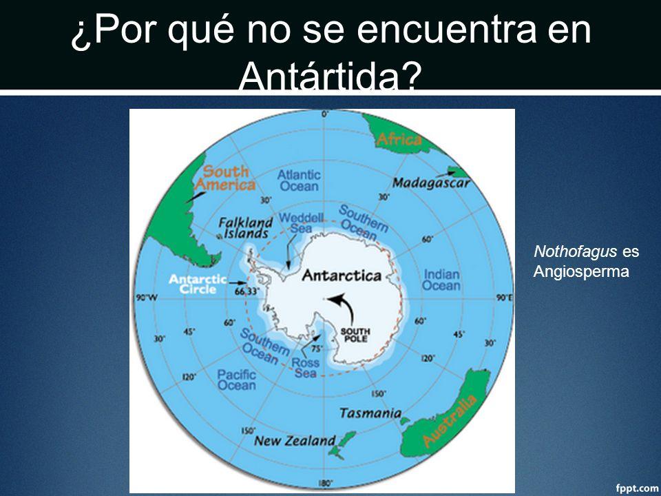 ¿Por qué no se encuentra en Antártida