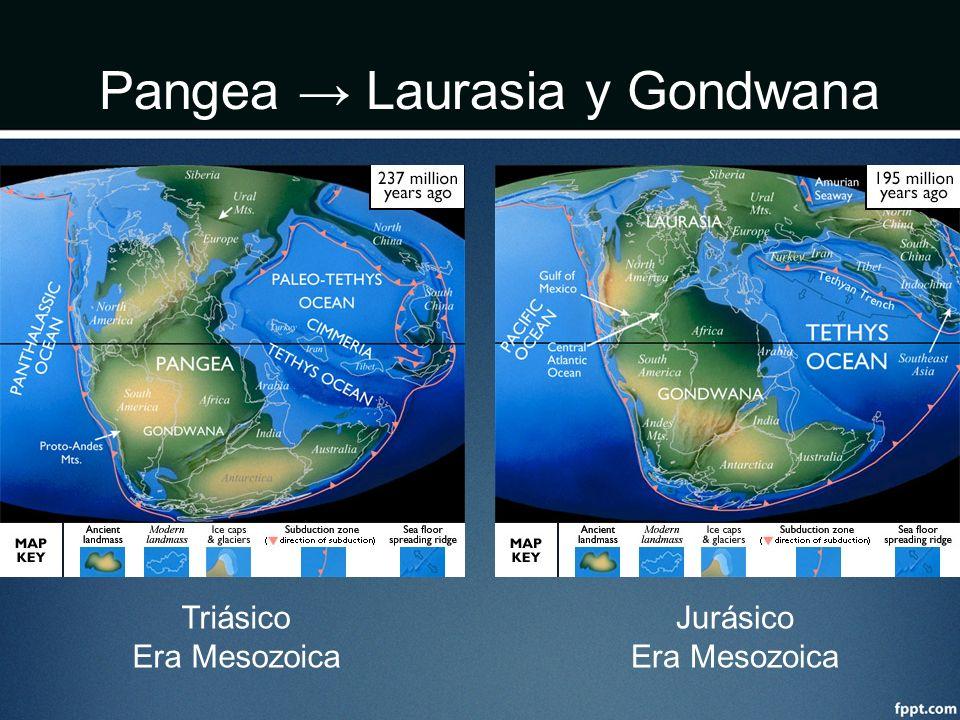 Pangea → Laurasia y Gondwana
