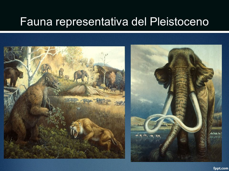 Fauna representativa del Pleistoceno