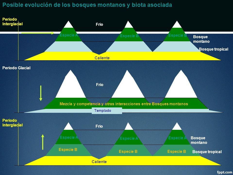 Posible evolución de los bosques montanos y biota asociada