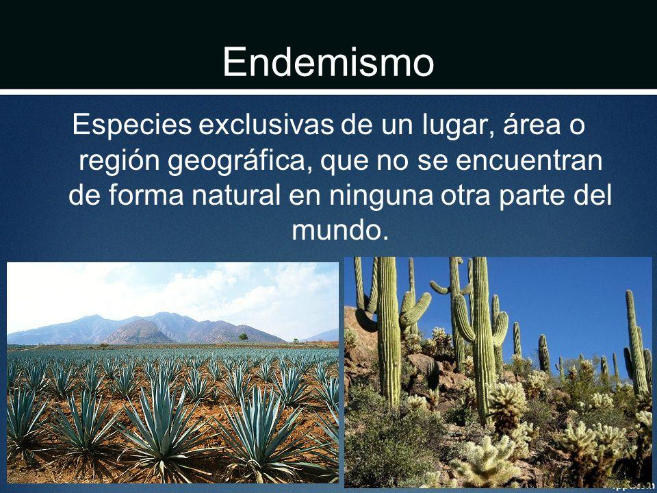 Endemismo Especies exclusivas de un lugar, área o región geográfica, que no se encuentran de forma natural en ninguna otra parte del mundo.