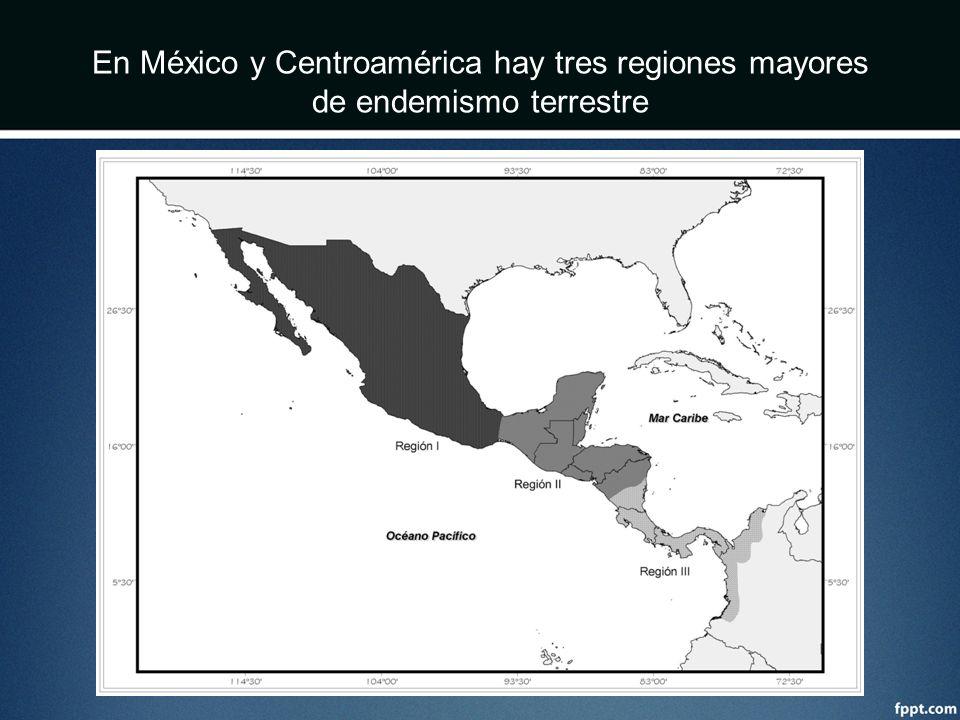 En México y Centroamérica hay tres regiones mayores de endemismo terrestre