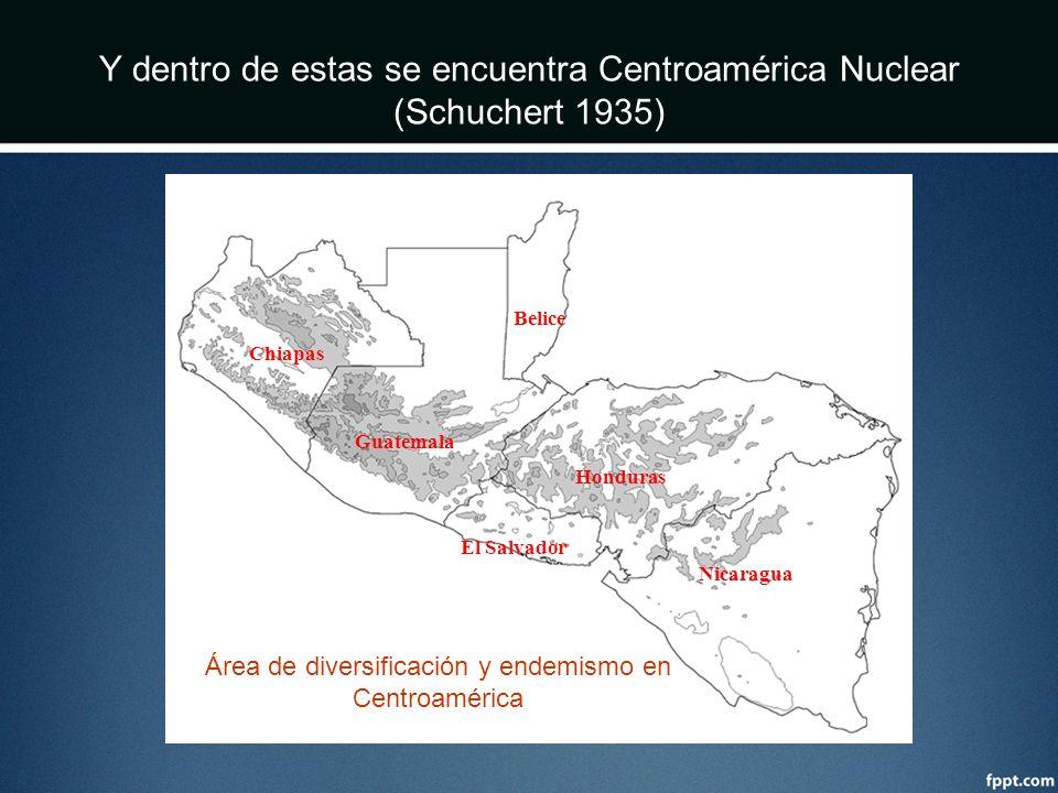 Y dentro de estas se encuentra Centroamérica Nuclear (Schuchert 1935)