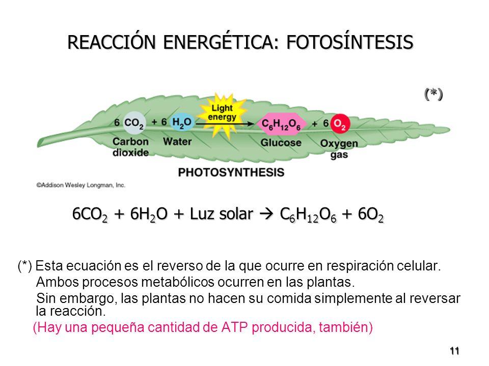 REACCIÓN ENERGÉTICA: FOTOSÍNTESIS