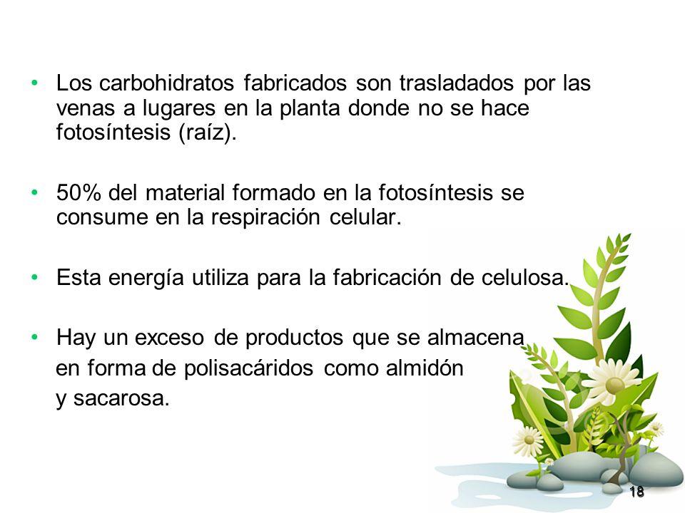 Esta energía utiliza para la fabricación de celulosa.