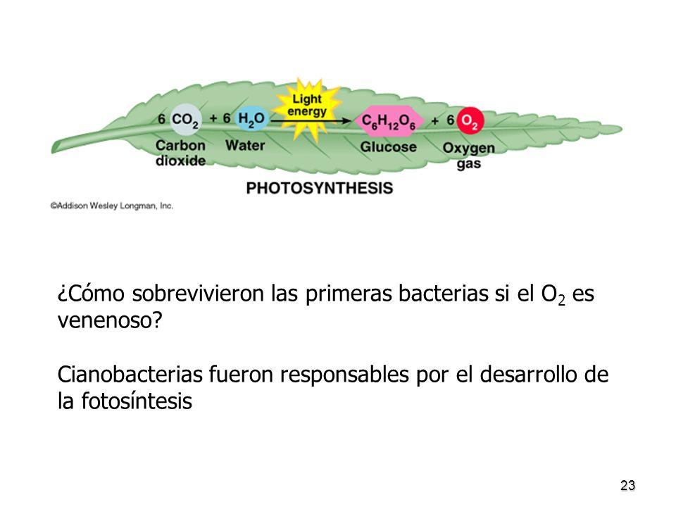 ¿Cómo sobrevivieron las primeras bacterias si el O2 es venenoso