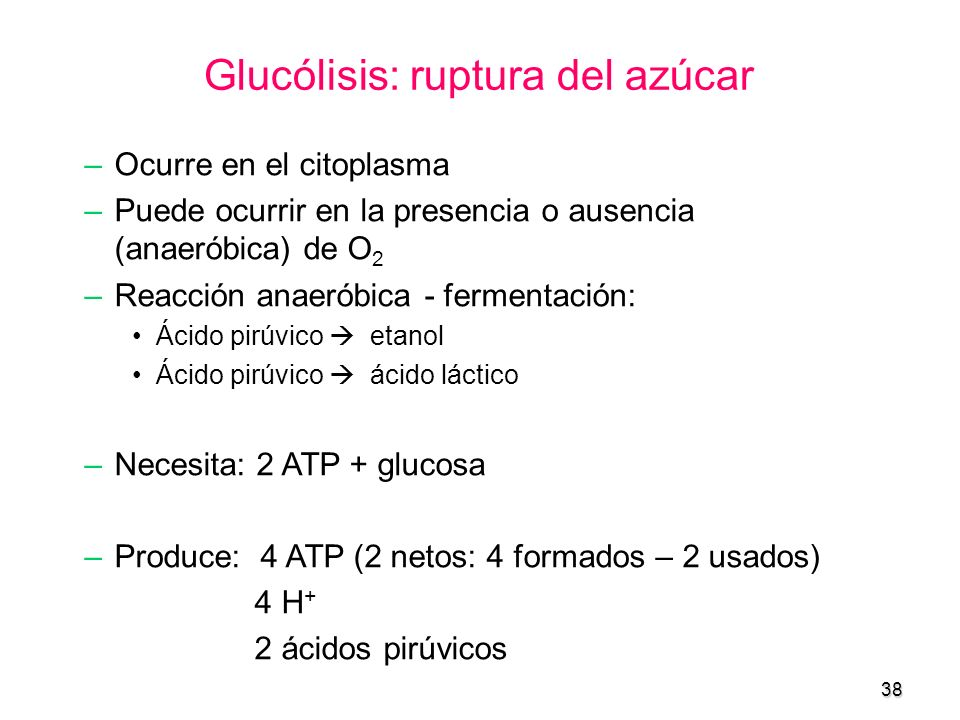 Glucólisis: ruptura del azúcar