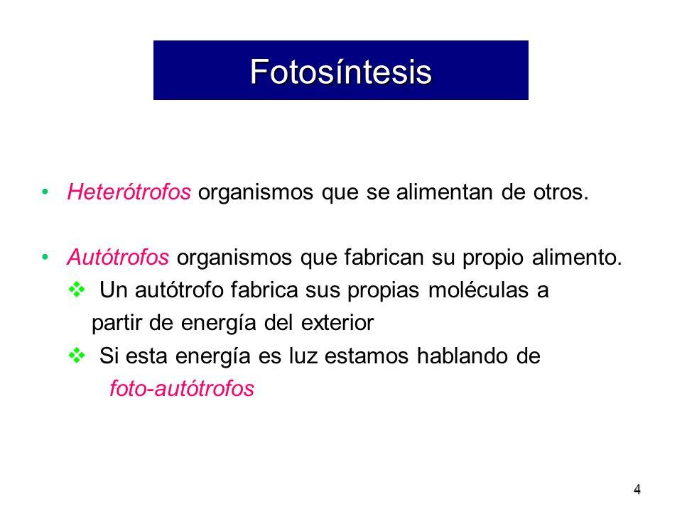 Fotosíntesis Heterótrofos organismos que se alimentan de otros.