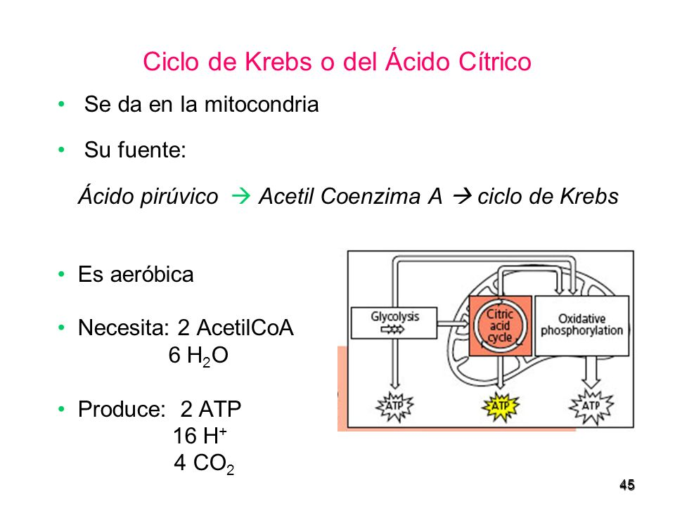 Ciclo de Krebs o del Ácido Cítrico