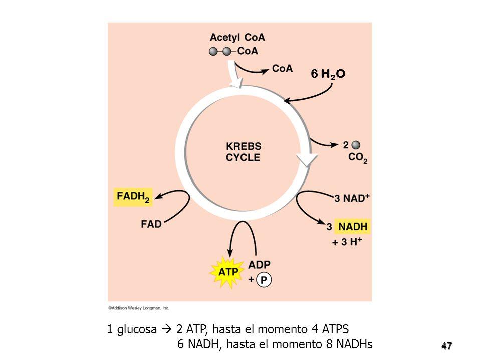 1 glucosa  2 ATP, hasta el momento 4 ATPS