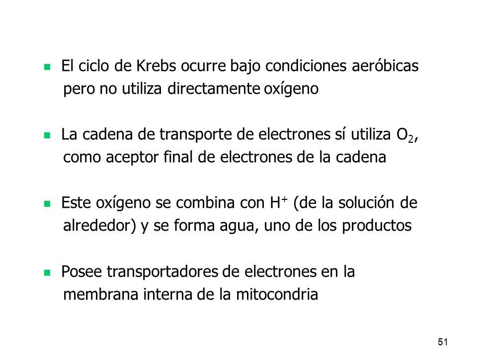El ciclo de Krebs ocurre bajo condiciones aeróbicas