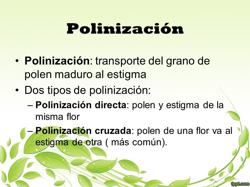 Polinización Polinización: transporte del grano de polen maduro al estigma. Dos tipos de polinización: