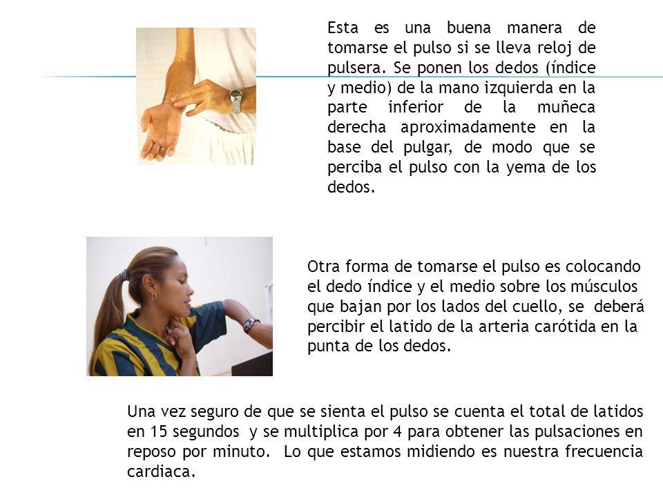 Esta es una buena manera de tomarse el pulso si se lleva reloj de pulsera. Se ponen los dedos (índice y medio) de la mano izquierda en la parte inferior de la muñeca derecha aproximadamente en la base del pulgar, de modo que se perciba el pulso con la yema de los dedos.