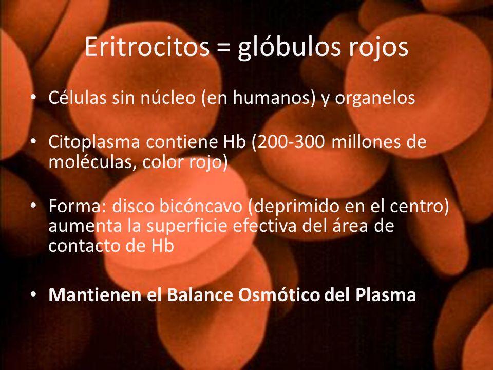 Eritrocitos = glóbulos rojos