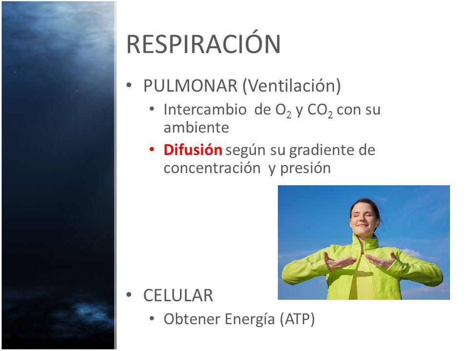 RESPIRACIÓN PULMONAR (Ventilación) CELULAR