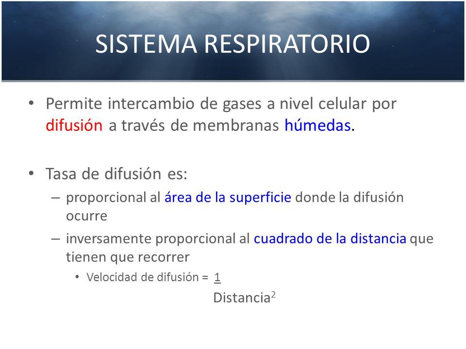SISTEMA RESPIRATORIO Permite intercambio de gases a nivel celular por difusión a través de membranas húmedas.