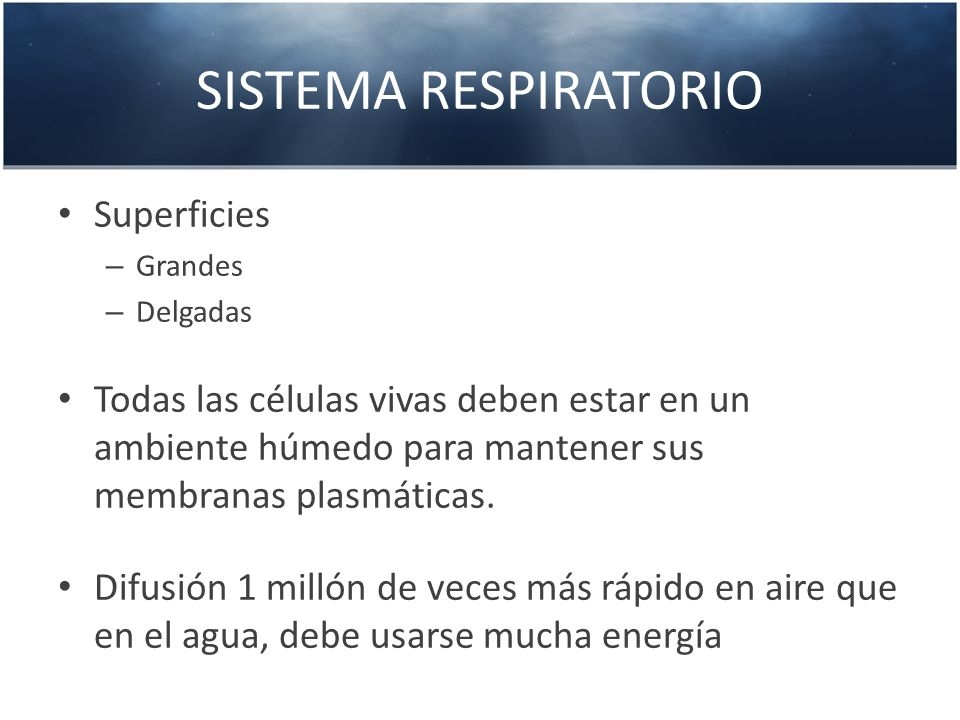 SISTEMA RESPIRATORIO Superficies