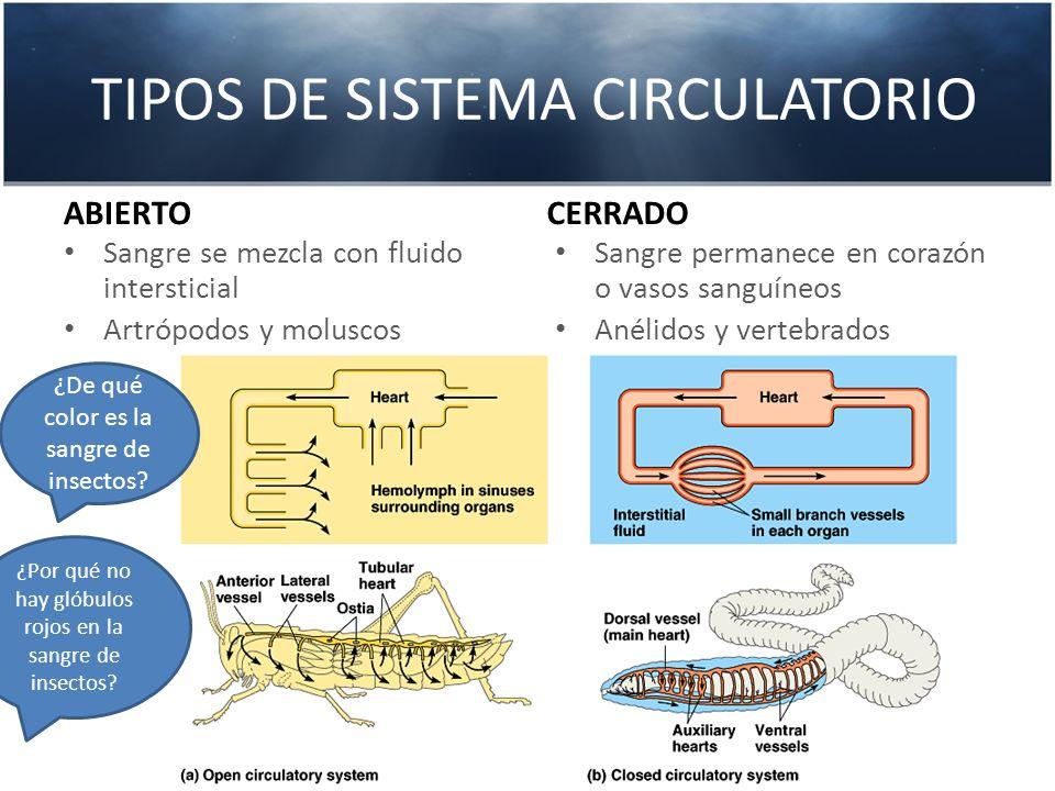 TIPOS DE SISTEMA CIRCULATORIO