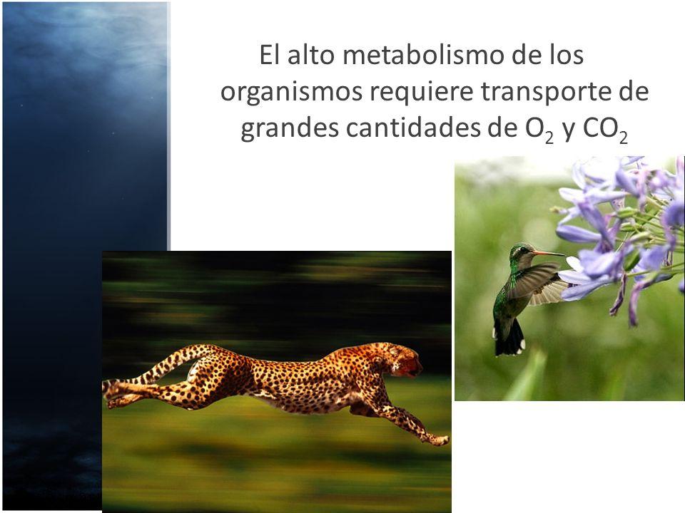 El alto metabolismo de los organismos requiere transporte de grandes cantidades de O2 y CO2
