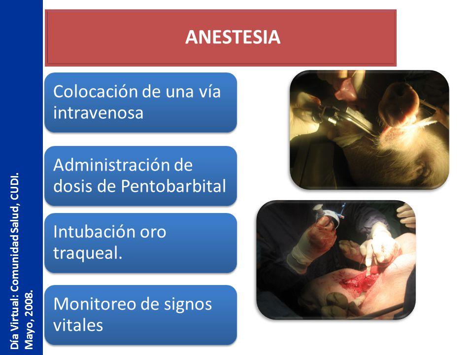 ANESTESIA Día Virtual: Comunidad Salud, CUDI. Mayo, 2008.