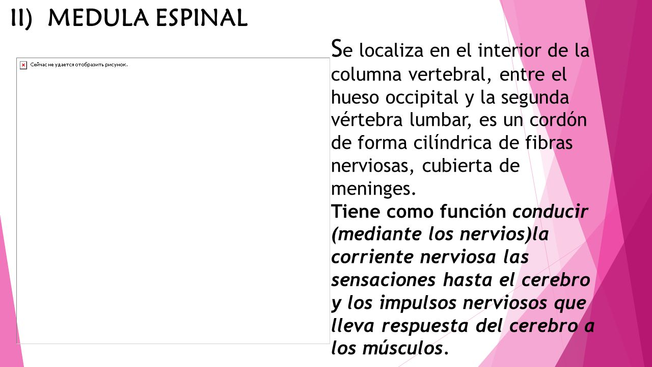 II) MEDULA ESPINAL