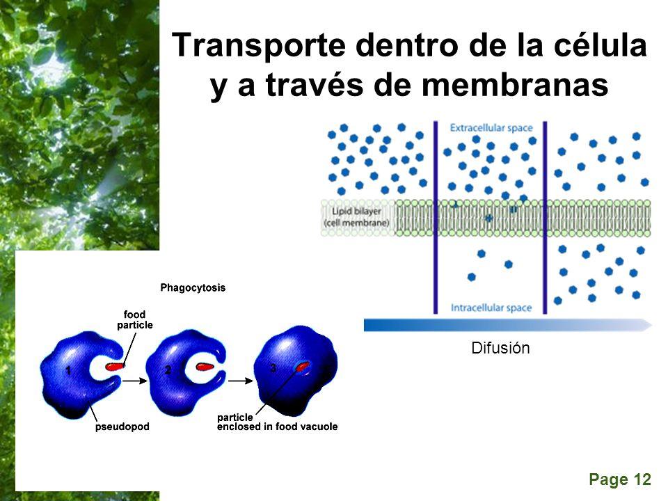 Transporte dentro de la célula y a través de membranas