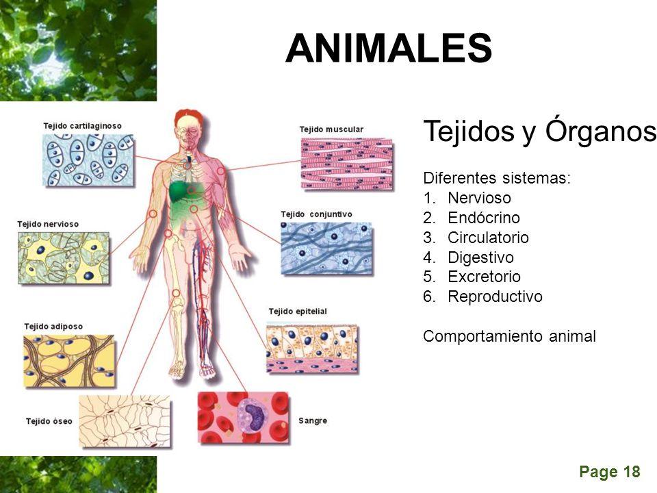 ANIMALES Tejidos y Órganos Diferentes sistemas: Nervioso Endócrino